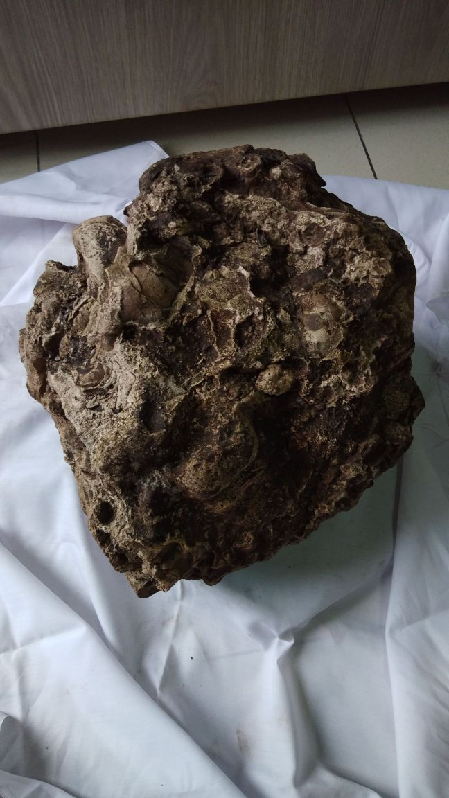 How To Identify Ambergris  Colour  Smell  Ambergris Tests
